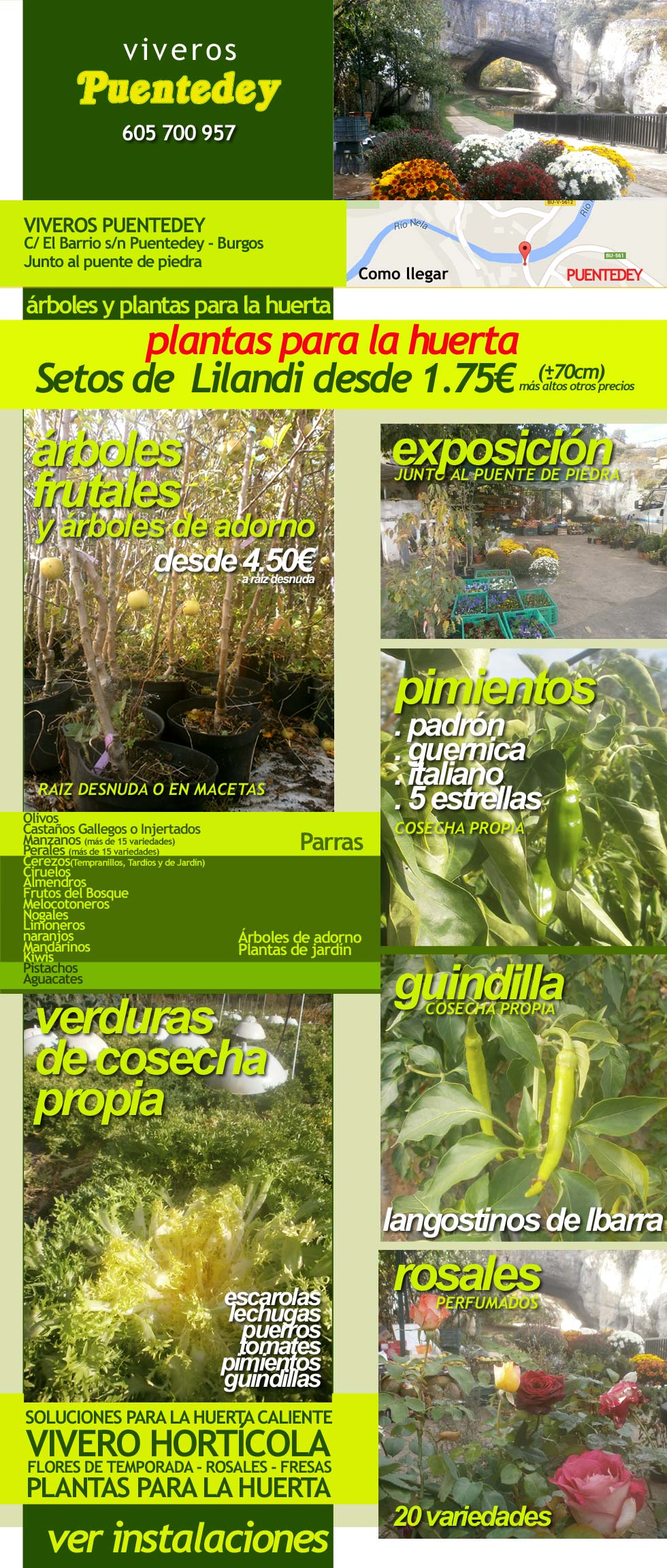 Viveros de arboles frutales en bilbao y en burgos desde 4 for Viveros arboles frutales